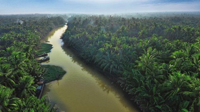 """Doanh nghiệp Việt và dự án kiến tạo """"10.000ha vườn dừa organic cho nông dân"""""""